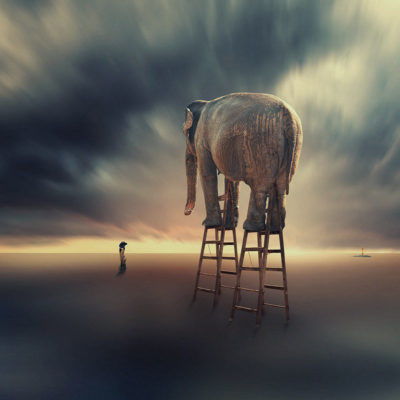 FineArt_Elephant_029_Overcome_Your_Fear